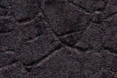 blackcrocodile