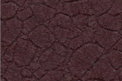 browncrocodile